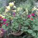 Botanical Garden, Munnar .... Vanita Thakkar (2009)