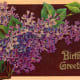 "vintage birthday card: lilacs ""Birthday Greetings"""
