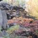 Rocks and fall colors along Sandy Creek Trail