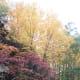 Fall colors along Sandy Creek Trail