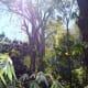 The Jungle of Mexico near Puerto Vallarta