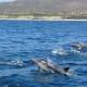 Spinner Dolphins near Cabo San Lucas