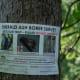 Emerald Ash Borer control effort, please do not disturb