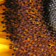 The thousands of stamens on this Sunflower look like an army of small bugs. After looking at this picture, it will be hard to ever view a sunflower the same again.