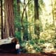 Redwoods National Forest