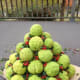 Completed Hedge Apple Christmas Tree