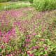"""Belly button flowers in the """"Garden of Eden."""""""