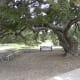 Picnic areas   Dick Nichols Park Austin TX