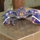 Around one in two million lobsters is blue. The red colour associated with lobsters only appears after cooking.