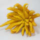 This Buddha's Hand citron was photographed by Kaldari on March 15, 2009.