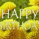Happy birthday yellow spring flowers.