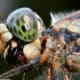 This dragonfly's mouth is messy because it is in the process of eating an ant. Check out the pattern on this dragonfly's eyes. Click on the image to display a larger image.
