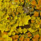 The types and colors of this lichen make it truly striking.
