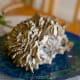 """Maitake mushroom: """"Hen of the Woods"""""""
