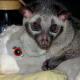 One of Bindi's favorite stuffed animals.