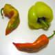 More pepper varieties used to make paprika