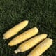 Four corn cobs, ready to cook.
