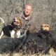 American English Coonhound Hunting Boar