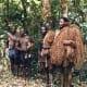 Ngozi Basenjis, Hunting with Dog