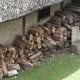 Firewood woodpile at Mountfitchet castle