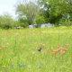 Nature Trail at the Lady Bird Johnson Park -  Fredericksburg TX
