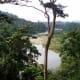 Primary rainforest in Borneo