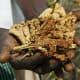 Harvested finger millet
