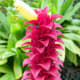 Pink Candy Ginger -  Used in Both Lei Making and Flower Arranging