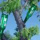bottletrees