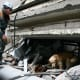 A rescuer and dog look for victims in the debris.    (REUTERS/Ilya Naymushin)