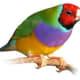 grow-drosophila-melanogaster-and-drosophila-hydei-wingless-fruitflies-for-your-pets