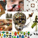 Featuring 10 insect inspired artists