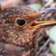 macrophotography-of-birds