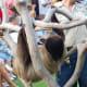 Sloth at Brevard Zoo