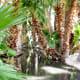 Agua Caliente stream to main pond