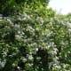 A pretty bush in bloom near the lake