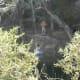 Swimming hole and cliff jumping Barton Creek Twin Falls Greenbelt Trail Austin TX