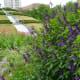 View of Garden Mound