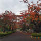 Beautiful colored leaves during fall