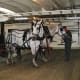 Touring the stables at the Grand Hotel