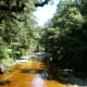Oparara River coloured by natural tannins
