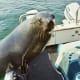 Seal near Swakopmund
