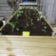 Decking seed bed, ideal for raising seedlings and growing vegetable plants.