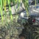 Archaeology 101 - Gameplay 06: Far Cry 3 Relic 7, Spider 7.