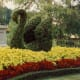 Many topiaries in the green spaces surrounding Main Street USA