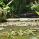 parc-floral-et-tropical-vendee-france