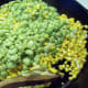 Add the cooked lima beans and stir.