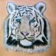 white-tiger-tattoo-designs-white-tiger-tattoo-ideas-white-tiger-tattoo-meanings-and-tattoo-pictures