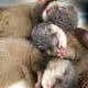 Cuddly, cuddly otter pups.