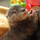 """Omar and Owen. """"Shhhhh quiet Owen!"""" says Omar. We lost Omar this year. They break your heart these otters."""